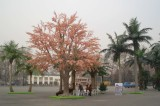 Land Scape for Big Park