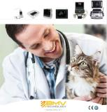 Small Animal Veterinary Solutions