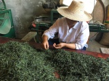 Refining tea by hand