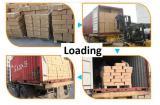 Shipment of the goods