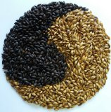 all kinds of berley malt for produce beer
