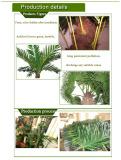 Plam Tree Details