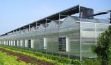 Intelligent Greenhouse