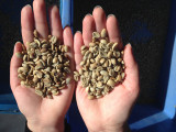 Coffee Beans Sample