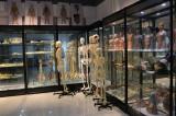 artificial skeleton Exhibition room 2