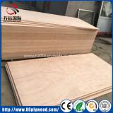 Bintangor/Okoume laminate plywood sheet