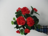 best selling Geranium flowers