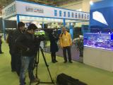 CIPS aquarium show 2015