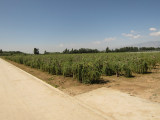 Planting base