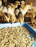 Poultry Feed (Feed Application)