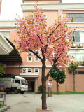 Cherry Tree in Front of Our Warehouse