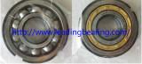 SKF Brand Bearing (BL305 NJ305)