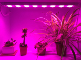 led grow light for ornamental plants