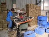 Mosaic assembly machine
