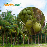 Nicepal Coconut Farm