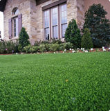 Landscaping grass for your park and yard