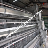 Henan Jinfeng Poultry Equipment Co.,Ltd.
