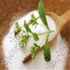 manufacture of stevia
