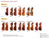 Middle-Advanced D,bass color chart