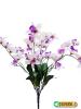 Orchid Bush