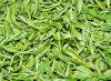 Certificate of Analysis - Green Tea Extract