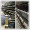 Steel structure poultry house layer equipment chicken farm