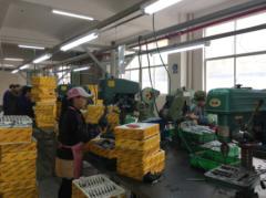 Wenzhou Jinwang Hardware Factory