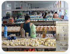 Quanzhou Mop Arts & Crafts Limited
