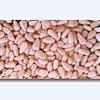 Pinenuts Kernels