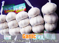 Qingdao Alliance Trading Co., Ltd.