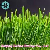 Plant Extract - Beijing Refine Biology Co., Ltd.