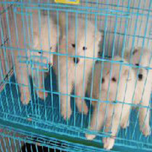 PVC Coated Dog Cages/ Pet Cage with Good Quaity (TS-J751)