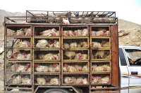 Saudi Arabia Imposes a Ban on Imports of Poultry Meat and Egg Products From Canada