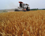 Chinese Government to Improve Modern Agriculture