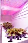 LED-Based Lighting Can Deliver Narrow-Spectrum Light