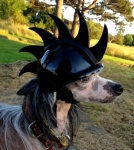 Pampered Pooch Enjoys Wearing Headgear in While Riding in Motorcycle Pet Carrier