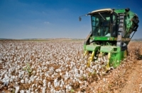 Argentine Province Would Be Getting Fund for Cotton Production During Cotton Harvest