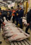 A Giant Bluefin Tuna Sold at a Japanese Auction on Sunday for Less Than Five Percent