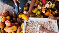Mars Completes Acquisition of Hacienda La Chola Cocoa Farm From Naturisa