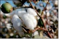 Vietnam's Cotton Consumption Declines