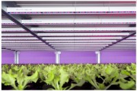 Advanced Sustainable Lighting Solutions