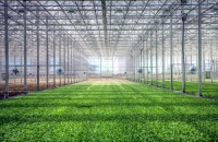 Brightfarms Raises $30.1m to Expand Greenhouses in US
