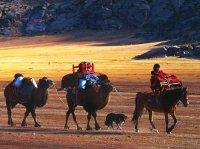 The Kazak Ethnic Minority Is Mainly in Ili Kazak Autonomous Prefecture