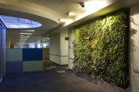 Innovative Concept for Their Office Spaces - Biophilic Design