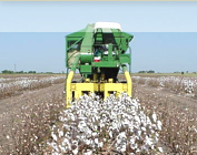 Up to 90 Percent of Cotton Grown in Uzbekistan Would Be Machine-Harvested by 2016