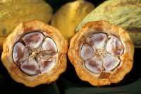 Olam to Acquire Global Cocoa Business of Archer Daniels Midland Company for $1.3bn