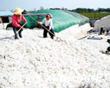 The Cotton Yield in China Forecast to Plunge