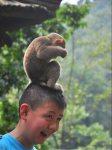 Celebrating Children's Day with Emei Mountain's Monkeys