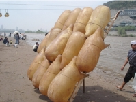 The Sheepskin Raft Is Popular Only Along The Banks of The Yellow River