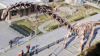 World's Largested Dinosaur Skeleton Debuted in Beijing